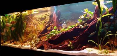 Diversi anche gi stili di habitat dei nostri acquari for Acquari particolari